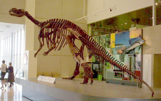 Skeleton of a Dinosaur in a Museum